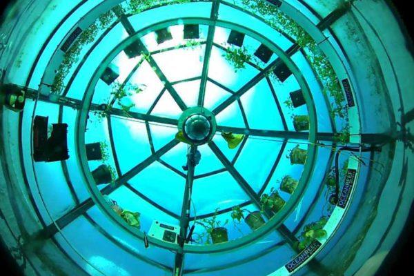 Jardin de Nemo